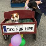 St Patricks Day Float Cavan